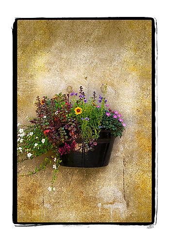 Flowers-carmel